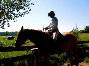 My other passion, horses!